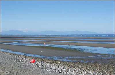 Boundary Bay At Low Tide